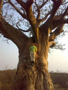 Baobab 3000 Years Old, Kruger Park