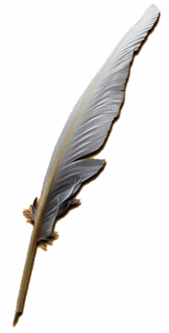 A white quill pen is poised as if to write a story, but no hand holds it.